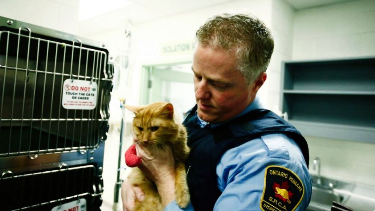 a SPCA agent holding a cat