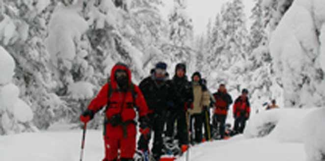 La ruta del oso en Laponia
