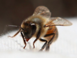 PHOTO: Help save the honey bees