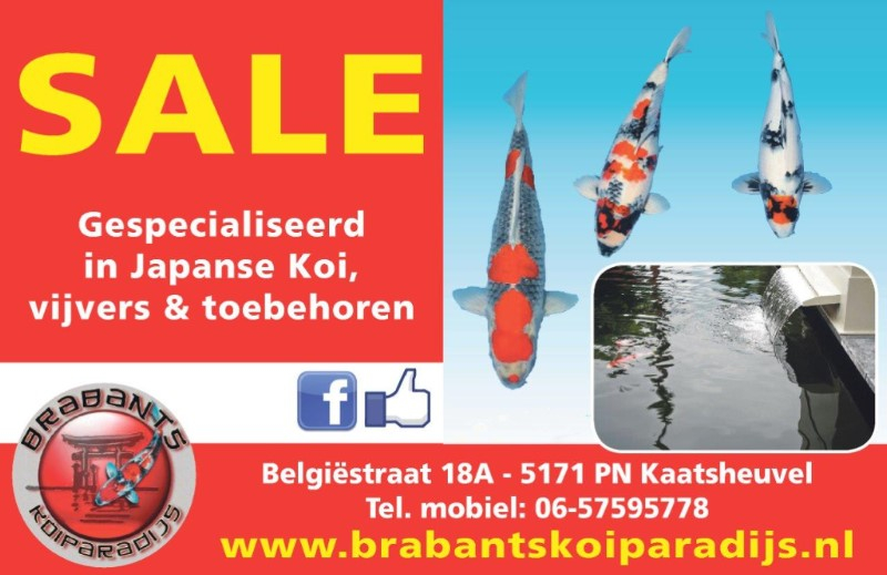 6513a312-3e59-48ef-a59f-803530363fcc Nieuwsbrief Brabants Koi Paradijs - Koigate