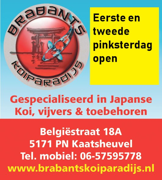 65b58113-21d7-4322-9721-4840df695e91 Nieuwsarchief - Koigate