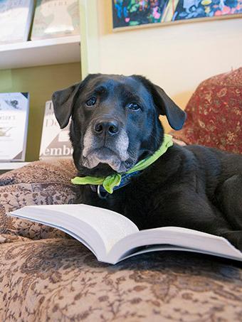 Jem the bookstore dog!