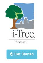 i- Tree Species Icon