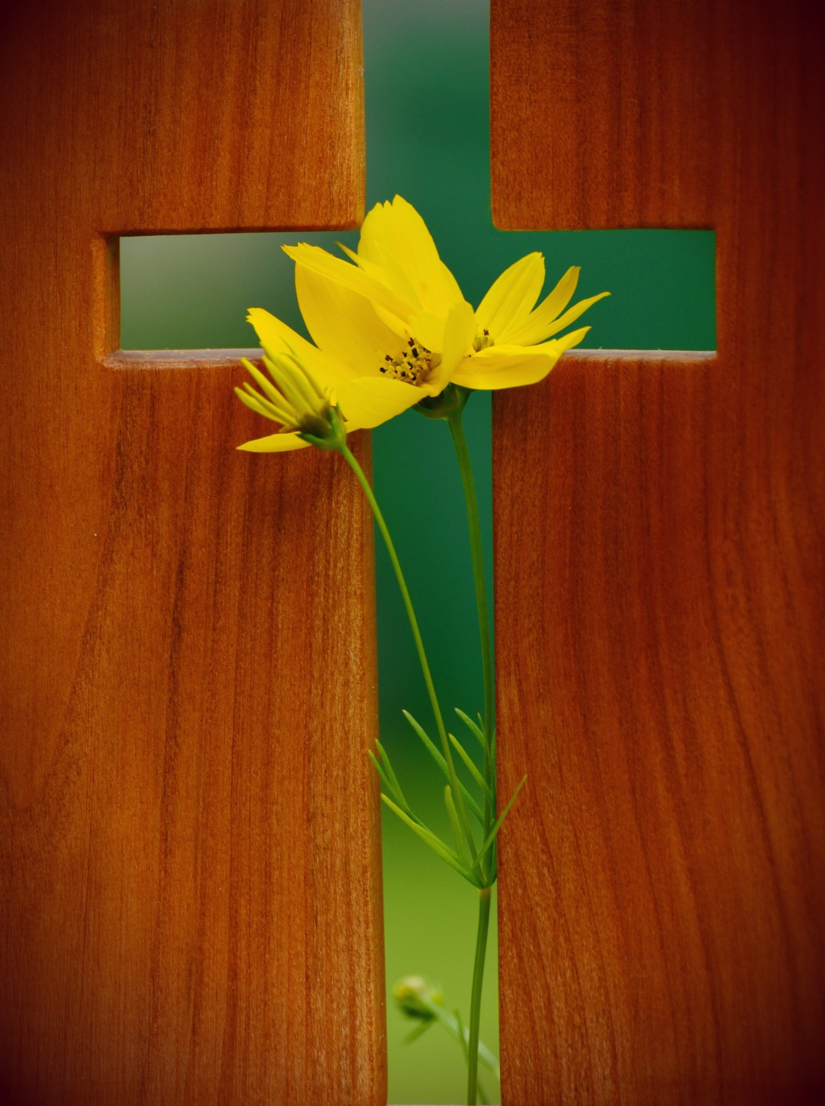 Cross and flower