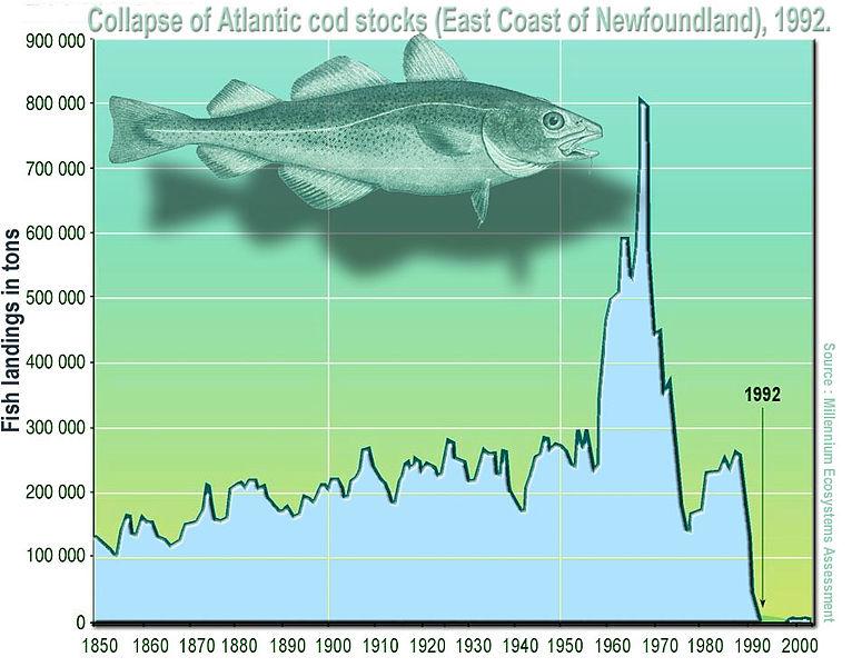 Collapse of Atlantic cod stocks
