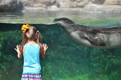 Viewing the Sea Lion at Waikiki Aquarium