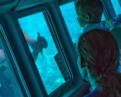 Child and woman inside vessel watching diver showing them a starfish under the sea