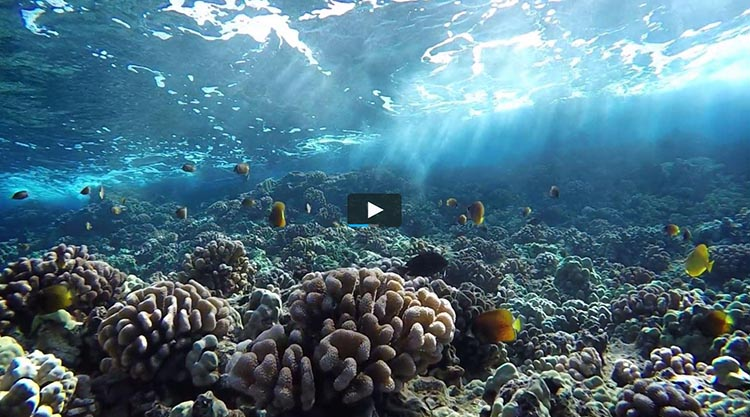 Snorkeling with Pride of Maui