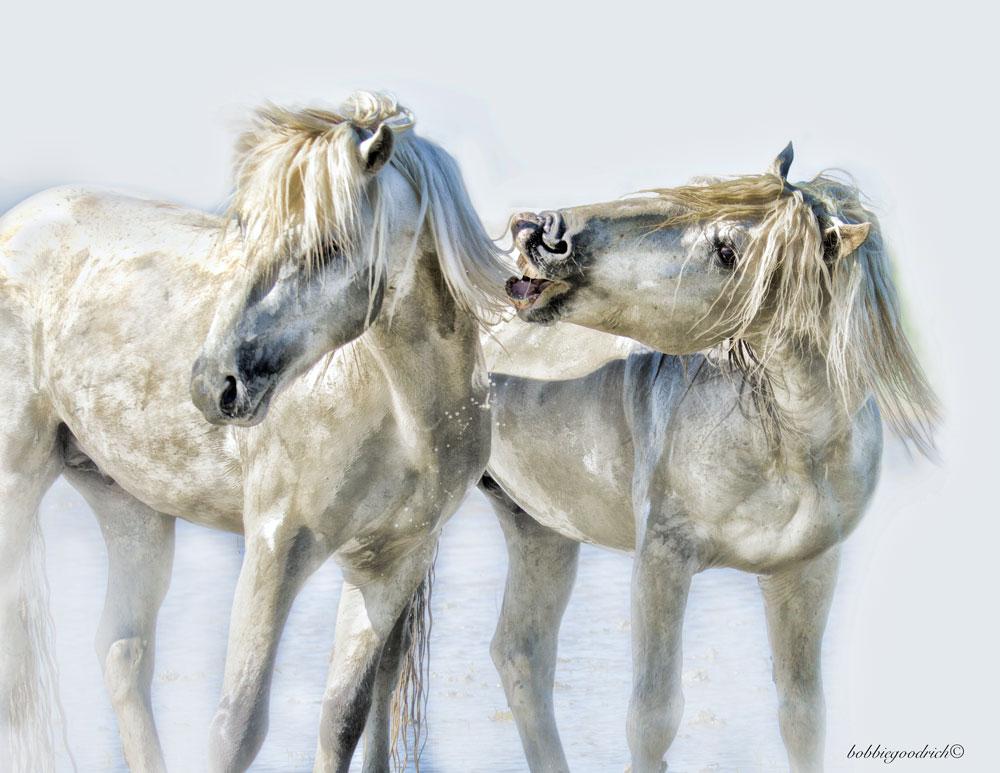 White Horses of the Camargue © Bobbie Goodrich