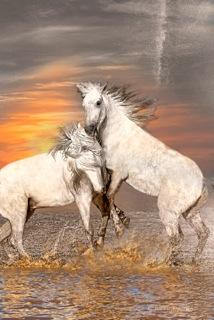 Bobbie Goodrich - Horses of the Camargue