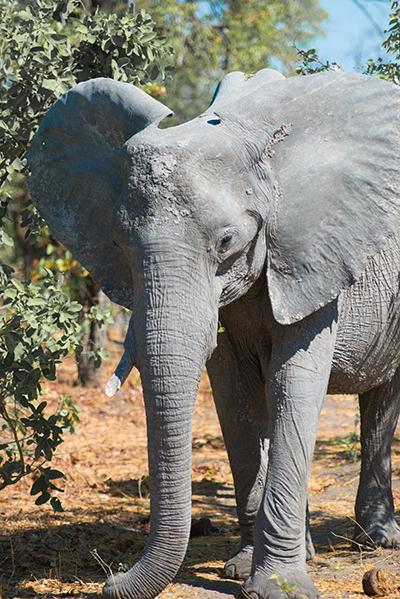 Bobbie Goodrich - African Wildlife