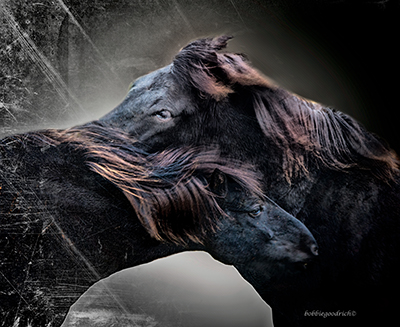 Bobbie Goodrich - Icelandic Horses