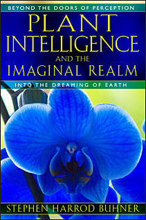 Plant Intelligence and the Imaginal Realm