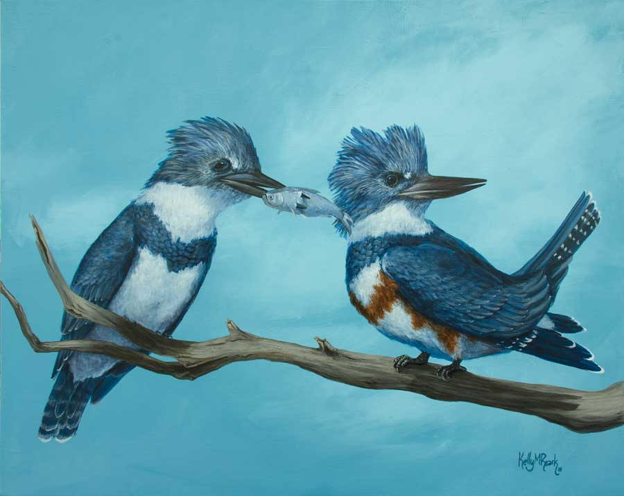 Belted Kingfishers - Her Majestys Wish - copyright 2018 Kelly Reark