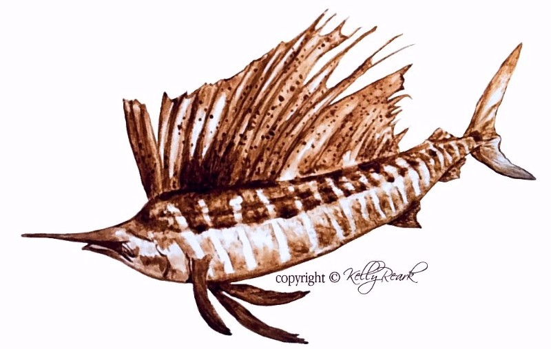 Sepia sailfish (c) Kelly Reark