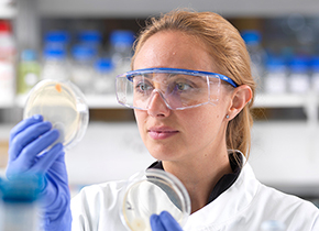 Scientist looking at dishes in the lab