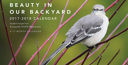 Wildlife Photography Calendar cover