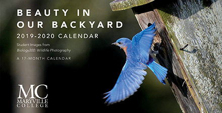 Wildlife Photography Calendar cover