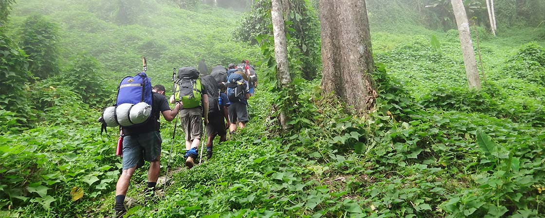 Trekkers along incredibly leafy, green track