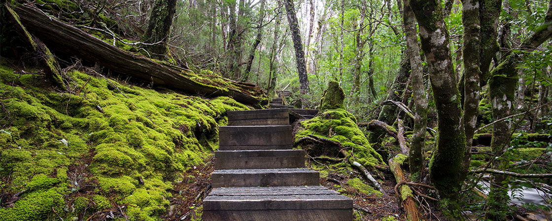 Steps into lush greenery at Crater Falls