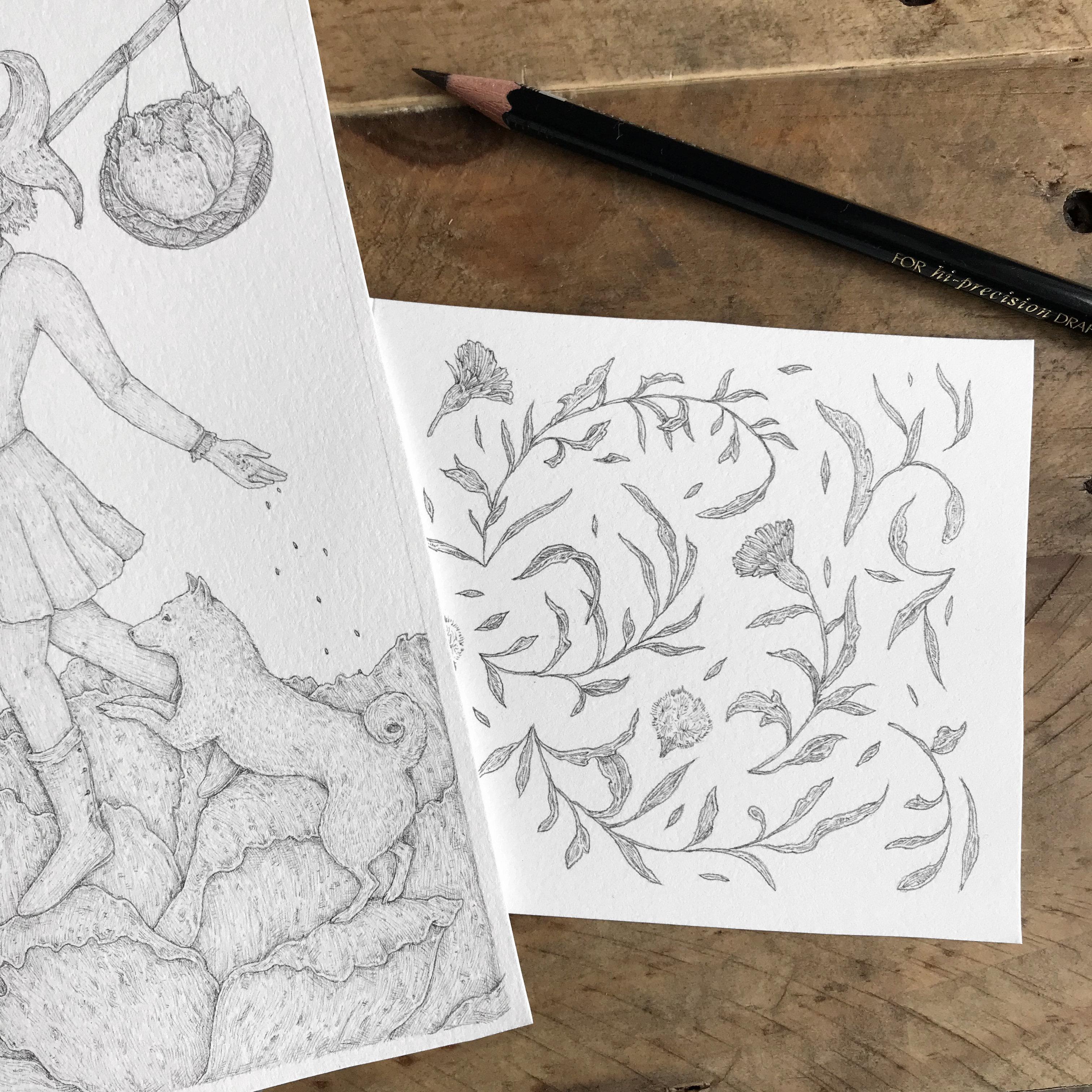 Process of designing Joker Lettuce