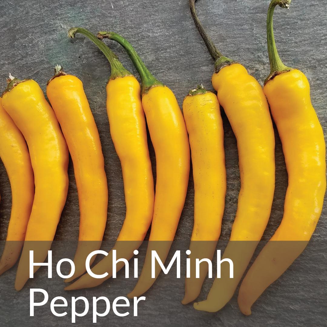 Ho Chi Minh Pepper