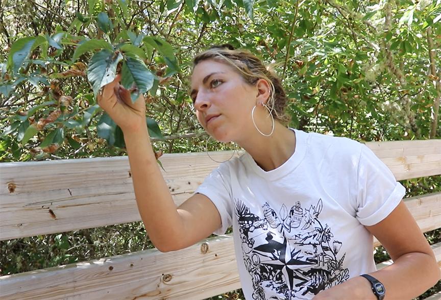 Diana Tataru examining a hazelnut branch
