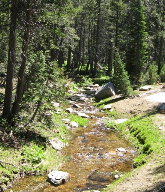 mountain stream with boulders flows past conifers