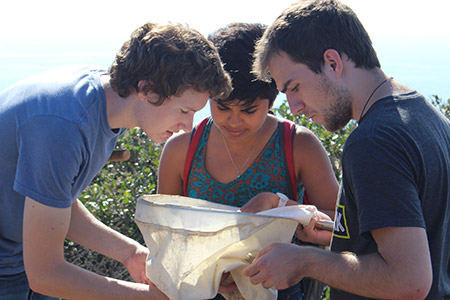 Three UCSD undergraduates examine a butterfly net for insects at Scripps Coastal Reserve.