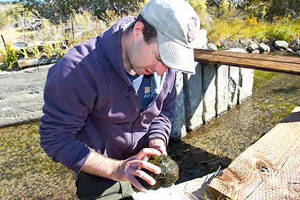 UC Davis graduate student Bruce Hammock at the Sierra Nevada Aquatic Research Laboratory