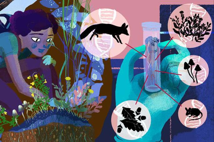 eDNA illustration