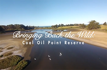 Bringing Back the Wild: Coal Oil Point Reserve