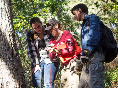 Three students take measurements at Big Creek Reserve to study sudden oak death