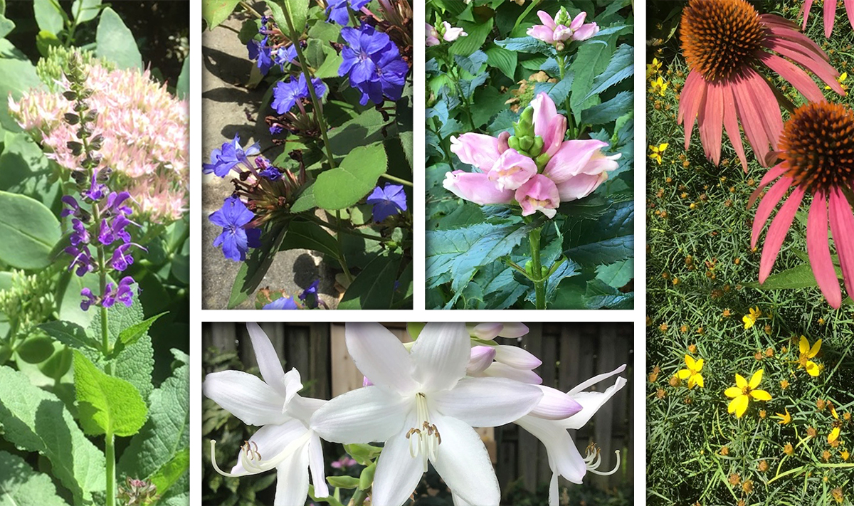 Late Summer Flowers