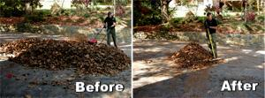 Leaf Mulch, Before & After Mowing