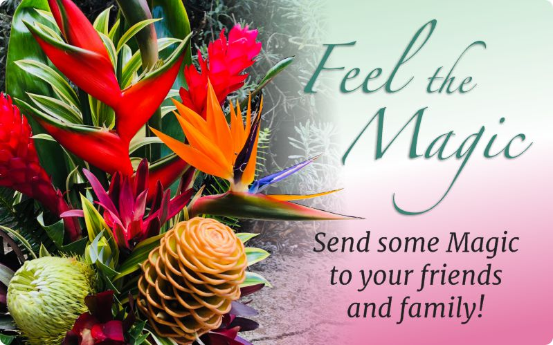 Feel the Magic - Send some Magic to your friends and family