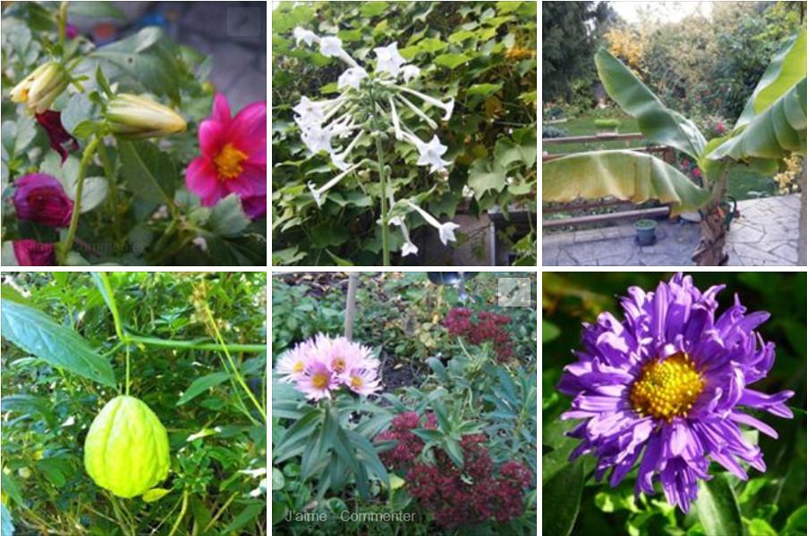 Les plantes du mois de septembre