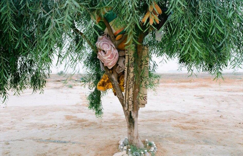 Ron Amir, Bisharah and Anwar's Tree, 2015