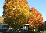 fall at collegeville institute