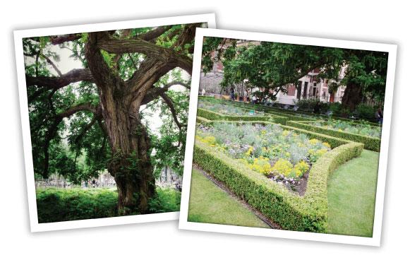 Garden Netherlands