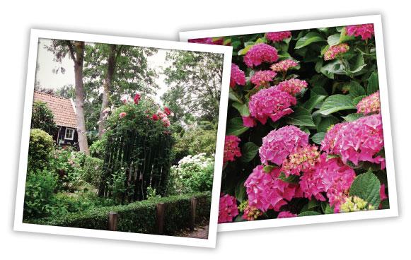 Gardens in Netherlands