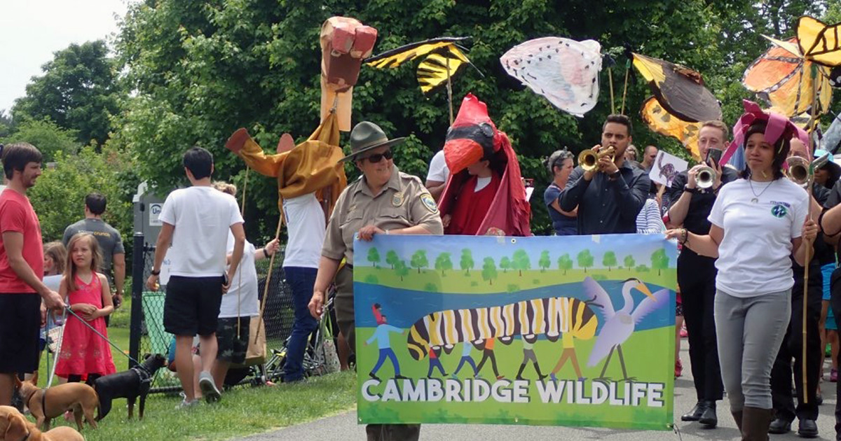 Large rabbit puppet made of cardboard Yellow and black butterfly puppets held by people on sticks. Woman in ranger hat and woman in white tee shirt each hold an end of a banner that says Cambridge Wildlife and has color artwork showing people in a monarch caterpillar.