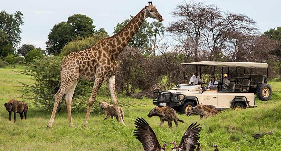 Botswana Vacation Travel Video Guide