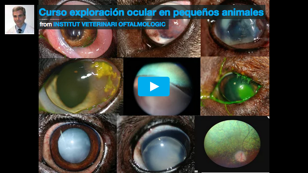 Video curso Exploración oftalmológica animal