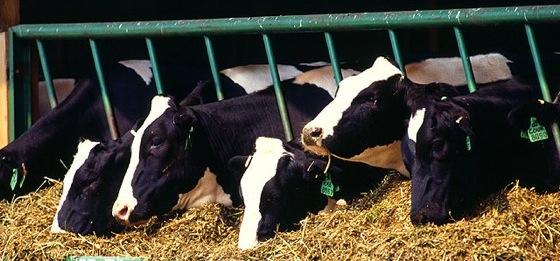DairyCast.com