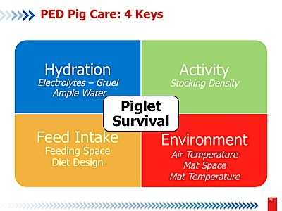 Early Pig Care with and without PED