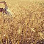 A man stretches in a wheat field