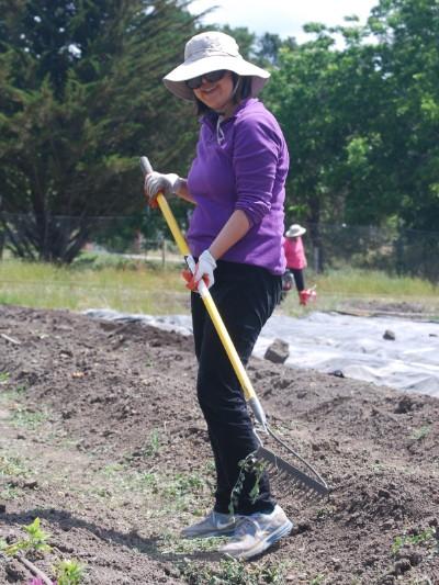 A volunteer hoes a row in the garden.