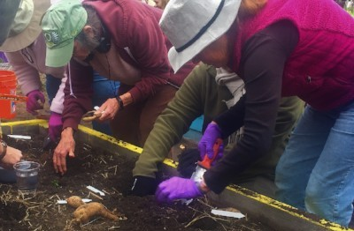 Workshop participants plant dahlia tubers in a raised bed.