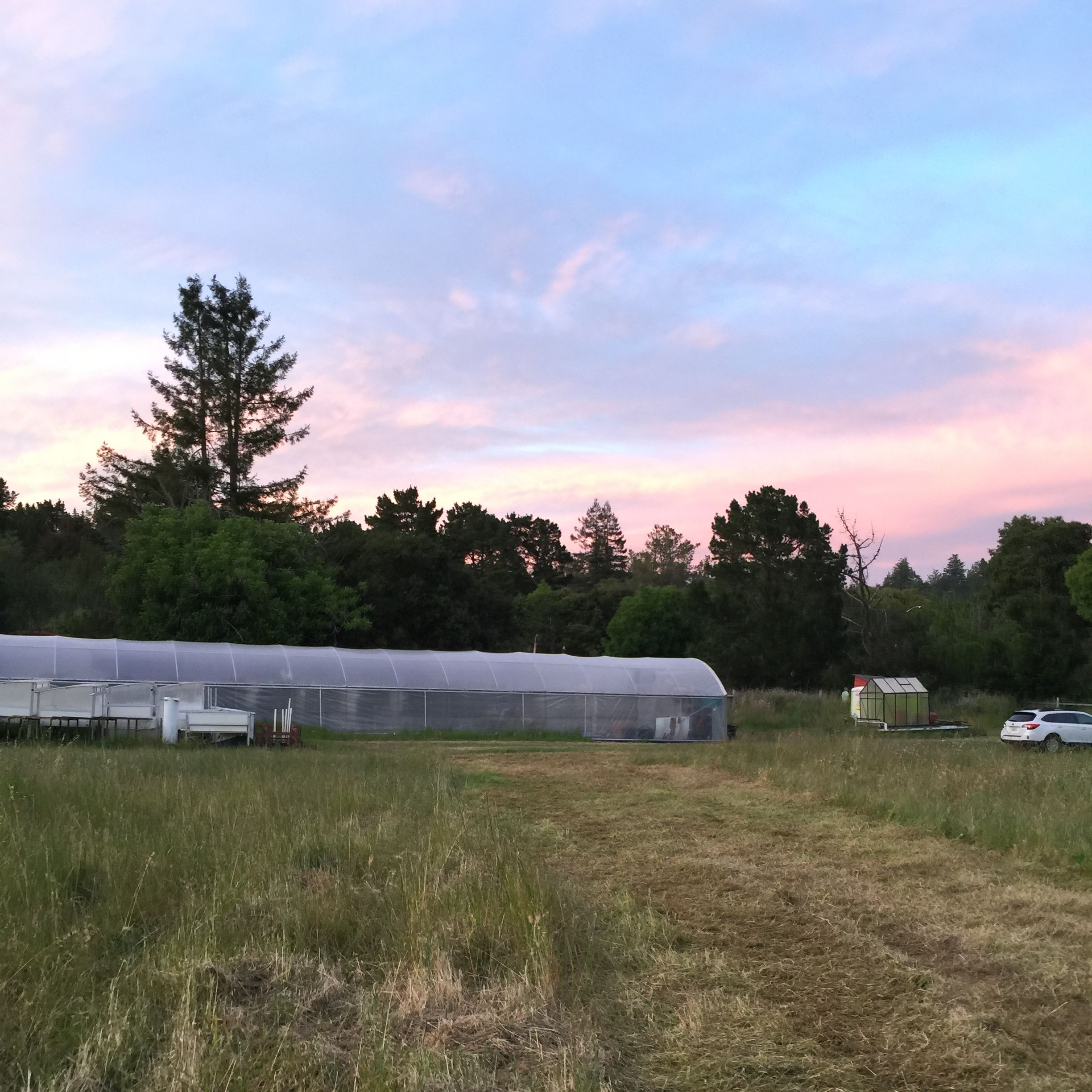 The fram fields with the cover crop and the greenhouse and sunset sky in the background.